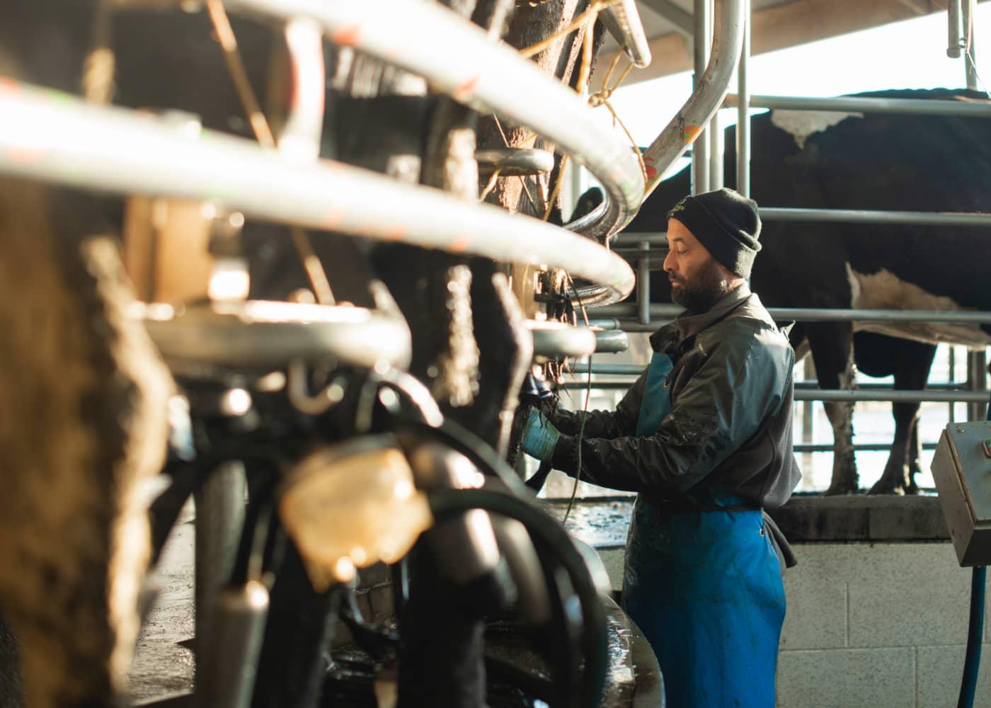 Farm benchmarking | Diprose Miller